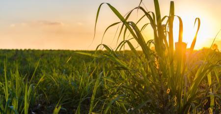 Entenda os desafios no processo de automatização do plantio de cana-de-açúcar