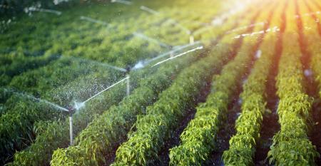 Como escolher e calcular a irrigação sem erro