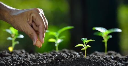 Saiba como obter o melhor resultado de um cultivo consorciado e faturar mais