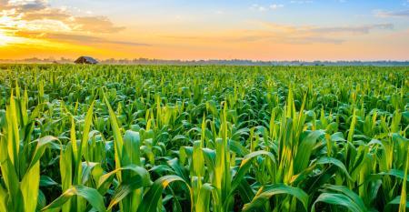 Futuro da alimentação desafia agronegócio. Como ser parte da solução?