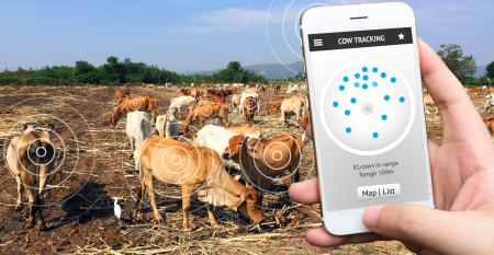 Pecuaristas, já ouviram falar da internet das vacas?