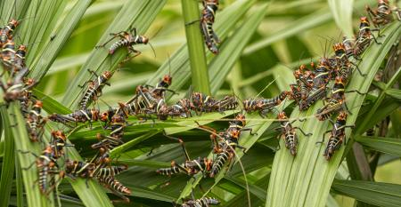 Monitoramento de pragas: como fazer via controle biológico?