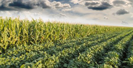 Plantio Direto ou Sistema Plantio Direto?