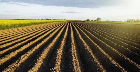 Quais as vantagens da Agricultura Conservacionista para o solo?
