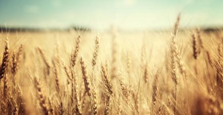 Cuidados na semeadura de verão