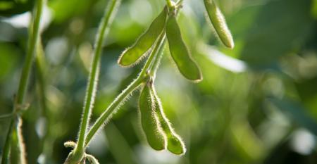 Conheça boas práticas no cultivo e colheita de soja