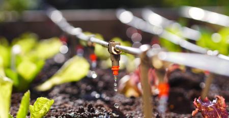 Confira qual o melhor método de irrigação para sua produção!