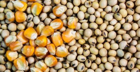 Plataforma analisa por talhão do cultivo de soja e milho em tempo quase real